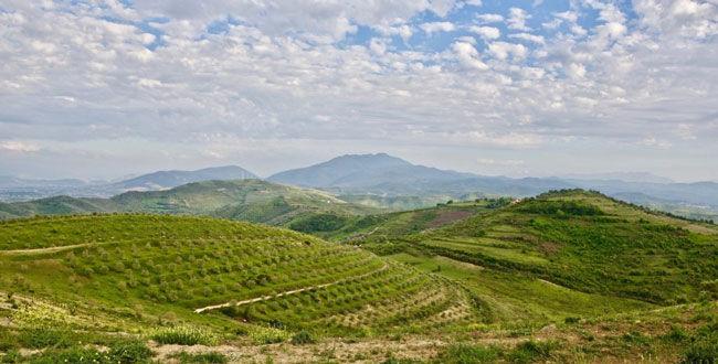 """""""Le Figaro"""": Shqipëria me vreshtat më të vjetra në Europë, kartolina që duhet zbuluar menjëherë"""