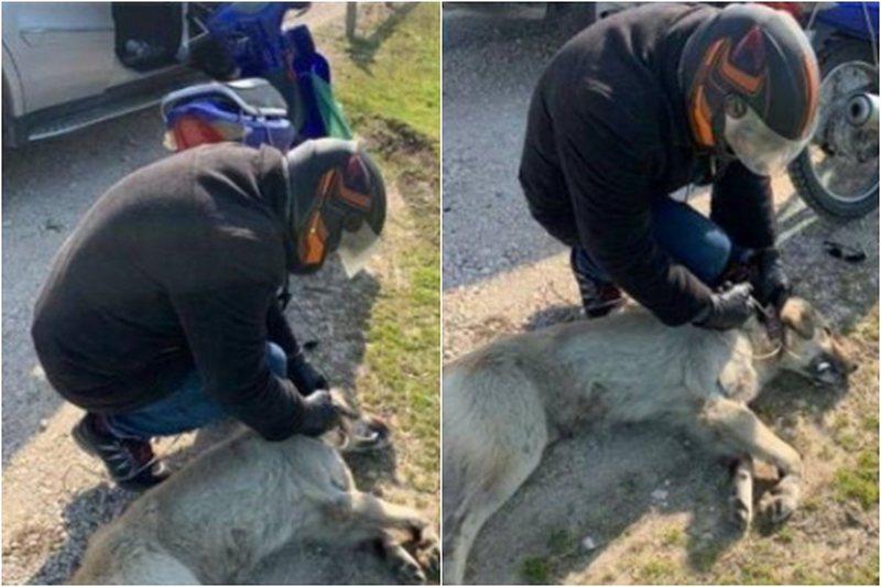 Tërhoqi zvarrë për disa metra qenin, e pëson keq 64-vjeçari